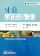 牙齒解剖形態學
